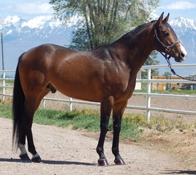 First Down Dash x Sizzling Lil, Sizzle Te.  Stallion