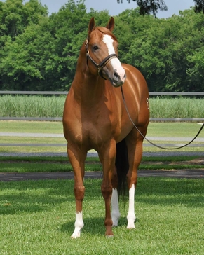 First Down Dash x Fishers Fantasy, For Really.  Stallion